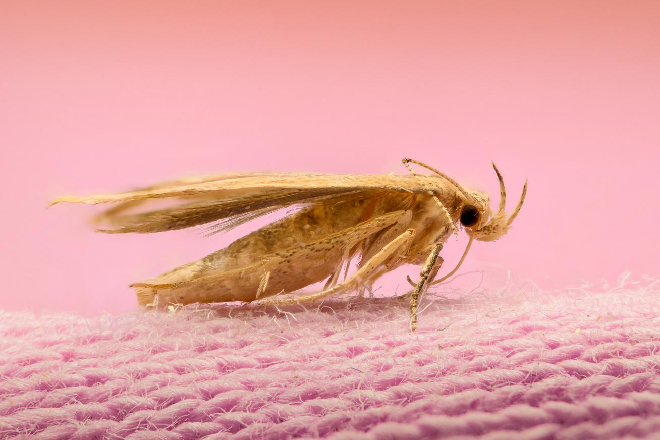Cum să protejăm covoarele de molii?